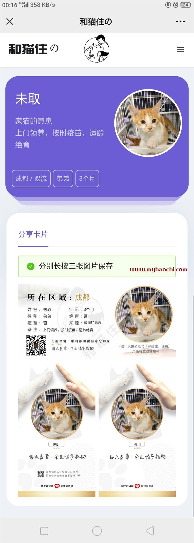 流浪猫流浪狗发布H5源码下载带演示